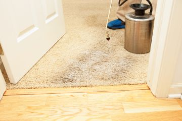 Carpet Stain Removal by Certified Green Team